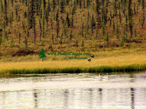 Kluane National Park, Yukon, Canada 07