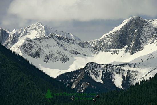 Kootenay National Park 2009, British Columbia CM11-05