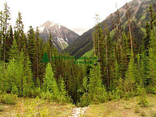 Kootenay National Park, British Columbia, Canada 02