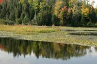 Highlight for Album: La Mauricie National Park of Canada Photos, Quebec, Canada, Canadian National Parks Stock Photos