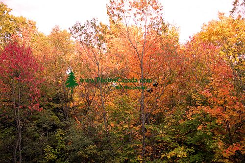 La Mauricie National Park of Canada, Quebec, Canada 05