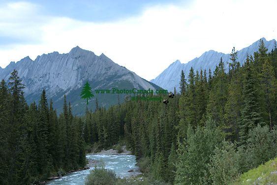 Maligne Range, Jasper National Park, Alberta, Canada CM11-08