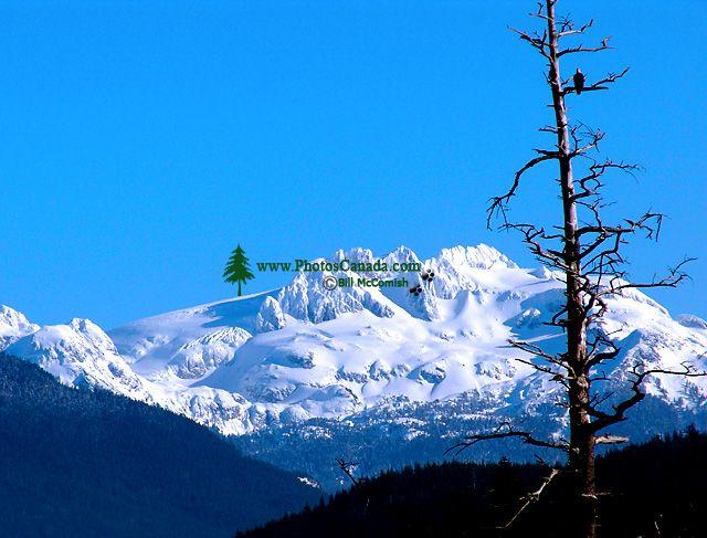 Mamquam Glacier, Bald Eagle, Squamish, British Columbia, Canada 01