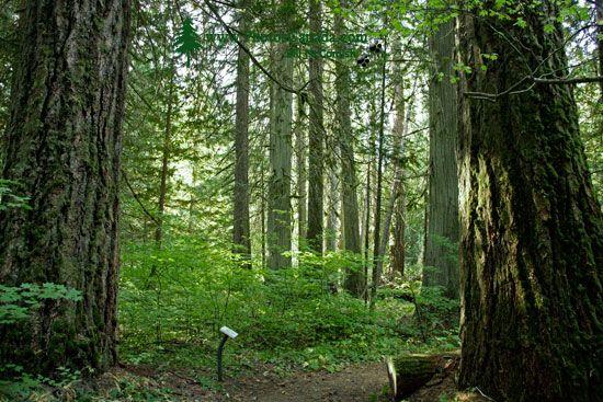 Sumallo Grove, Manning Park, British Columbia, Canada CM11-06