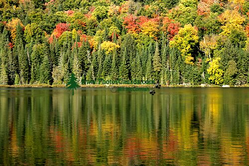 Mont Tremblant National Park, Quebec, Canada CM11-09