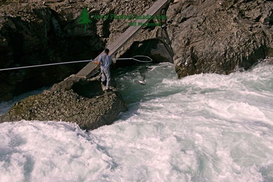 Moricetown, Bulkley River, Salmon Fishing, British Columbia, Canada CM11-004
