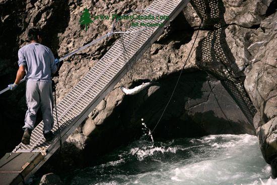 Moricetown, Bulkley River, Salmon Fishing, British Columbia, Canada CM11-006