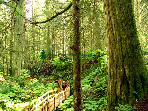 Giant Cedars Boardwalk Trail, Mount Revelstoke National Park, British Columbia, Canada 07