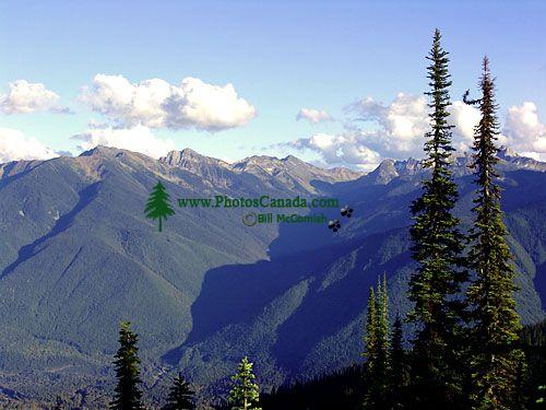 Mount Revelstoke National Park, British Columbia, Canada 06