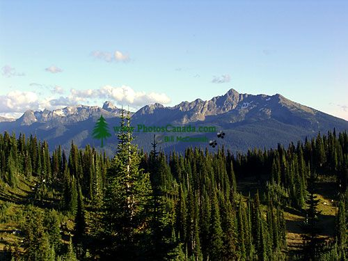 Mount Revelstoke National Park, British Columbia, Canada 03