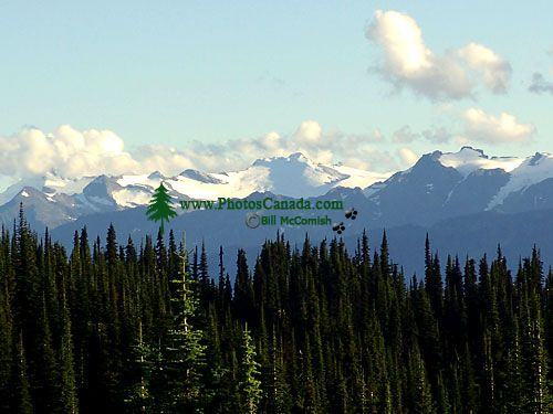 Mount Revelstoke National Park, British Columbia, Canada 01