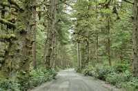 Naikoon Park, Queen Charlotte Islands, Haida Gwaii, British Columbia, Canada CM11-08