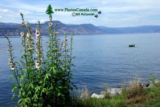 Naramata, Okanagan Region, British Columbia, Canada CM11-005