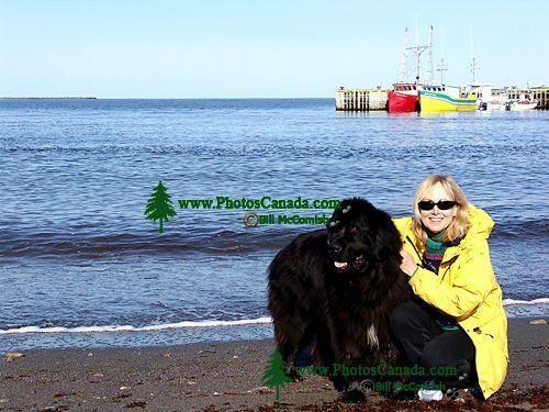 Newfoundlander Dog 03
