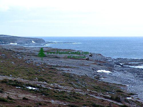 Gulf of St. Lawrence, Newfoundland, Canada 16