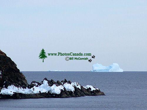 Iceberg Alley, Newfoundland, Canada 20