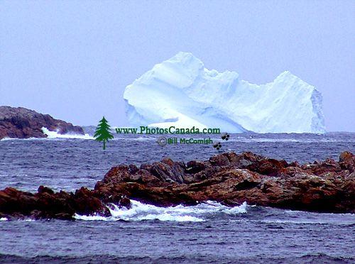 Iceberg Alley, Newfoundland, Canada 19