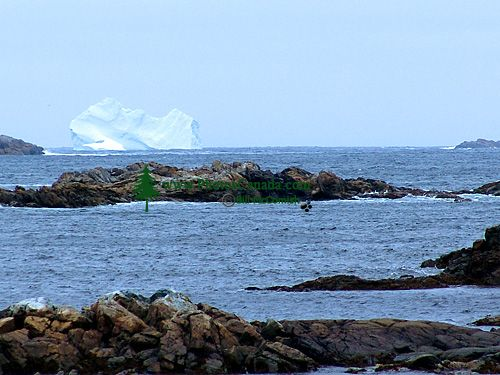 Iceberg Alley, Newfoundland, Canada 18