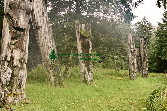 Ninstints Totem Poles, Anthony Island, Sgang Gwaay, UNESCO World Heritage Site, Gwaii Haanas National Park Reserve, Haida Gwaii, British Columbia, Canada CM11-05