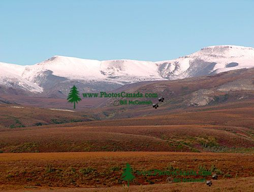 Dempster Highway, Northwest Territories, Canada 01