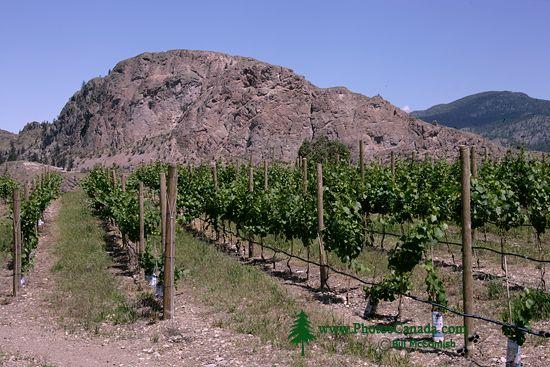 Okanagan Falls Wine Region, British Columbia CM11-003