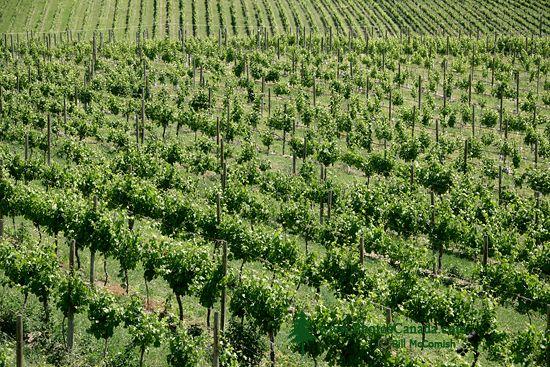 Okanagan Falls Wine Region, British Columbia CM11-004