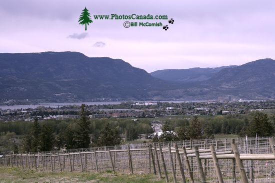 Okanagan Wine Region, British Columbia, Canada CM11-001