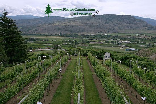 Oliver Wine Region, British Columbia CM11-002