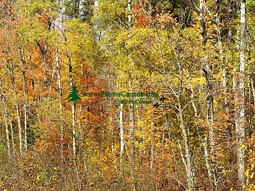 Route 11, Ontario, Canada 21