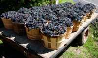 Ontario Wine Region, Southern Ontario, Canada CM-1203