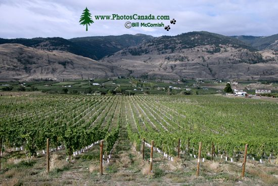 Osoyoos, Wine Region, British Columbia CM11-04