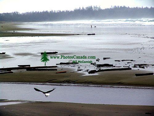 Pacific Rim National Park, British Columbia, Canada 04