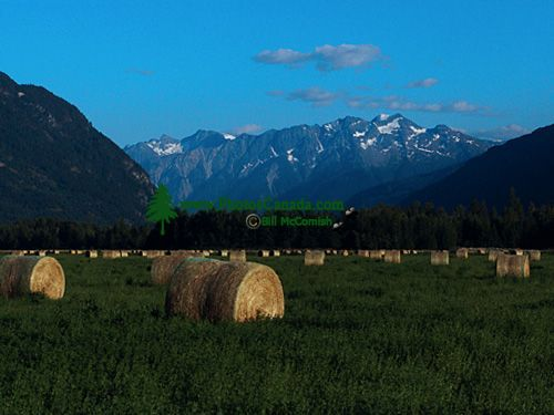 Pemberton Valley Farm, British Columbia, Canada 07