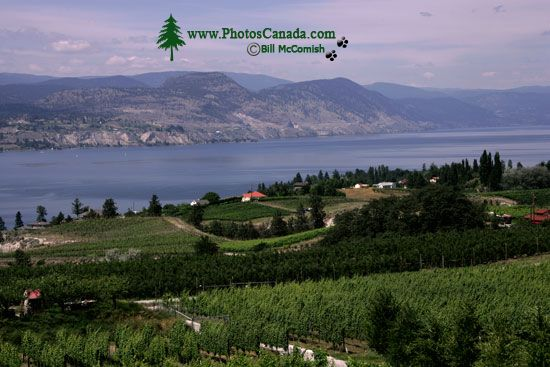 Penticton, Wine Region, British Columbia, Canada CM11-008