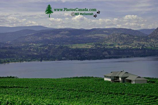 Penticton, Wine Region, British Columbia, Canada CM11-009