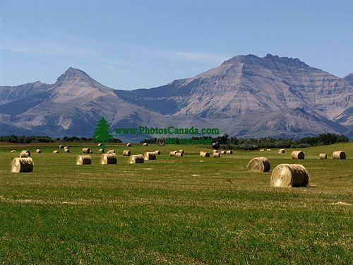 Twin Butte, Farm, Alberta, Canada 08