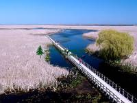 Highlight for Album: Point Pelee National Park of Canada Photos,  Ontario, Canada, Canadian National Parks Stock Photos