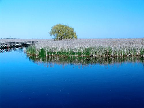 Point Pelee National Park, Ontario, Canada 05