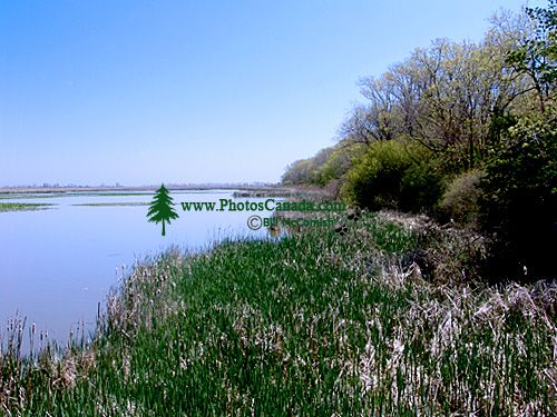 Point Pelee National Park, Ontario, Canada 04