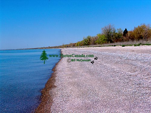 Point Pelee National Park, Ontario, Canada 02