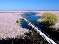 Highlight for Album: Point Pelee National Park