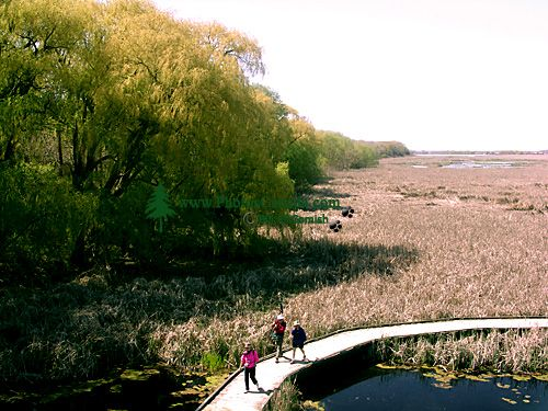 Point Pelee National Park 05