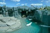 Highlight for Album: Toronto Zoo, Polar Bears, May 2010