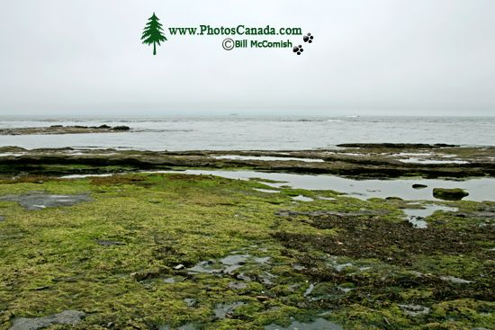 Port Renfrew Botanical Beach, Vancouver Island CM11-002