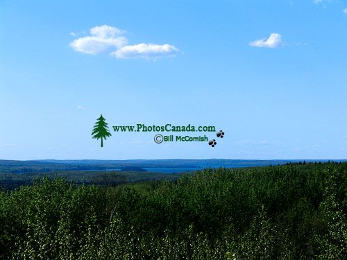 Boreal Forest, Prince Albert National Park, Saskatchewan, Canada   05