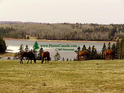 Cavendish Farm, Prince Edward Island, Canada 09