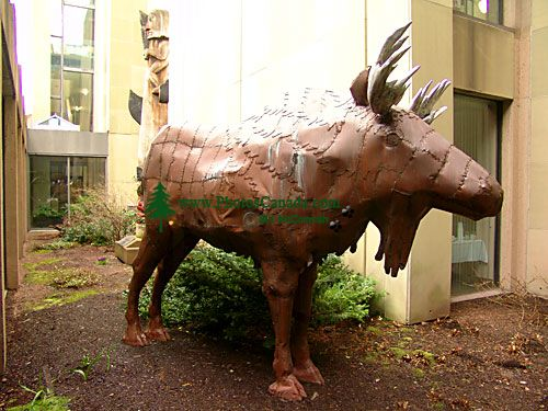 A Moose in the Charlottetown Library Courtyard, Prince Edward Island, Canada 07