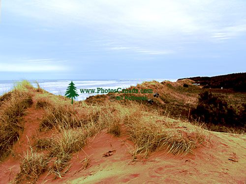 Cavendish Beach Sand Dunes, Prince Edward Island, Canada 15