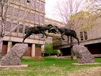 McGill University, Ram Sculpture, Montreal, Quebec, Canada 10