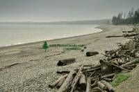 Highlight for Album: Queen Charlotte Islands Photos, Haida Gwaii Photos, British Columbia Stock Photos